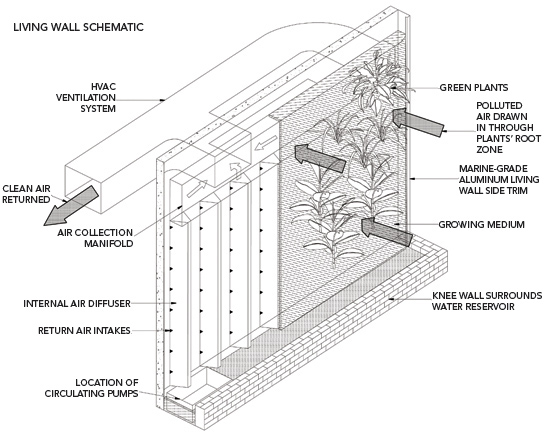 A Hydroponic Biofilter Uses A Combination Of Natural Plant Systems And  Manufactured Air Movement Systems To Move And Filter Air For Superior  Indoor Air ...