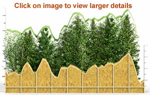 Lumber by the Numbers