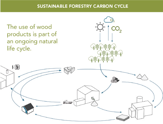 Evaluating the Carbon Footprint of Wood Buildings