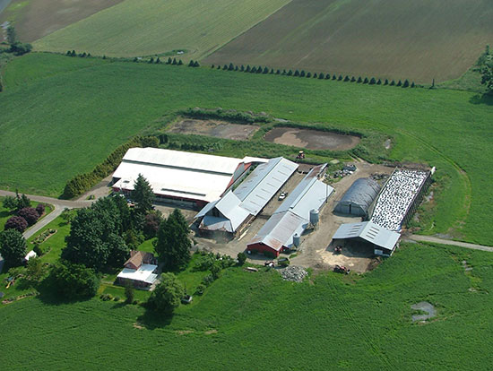 Who would have thought that installing a cool roofing system on a barn would improve the milk production of cows? But that is exactly what happened in Chilliwack, British Columbia.
