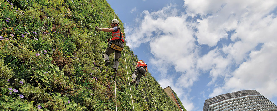 Photo of climbers on a wall with plantings.