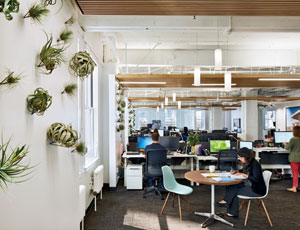 At the San Francisco offices of Fahr, LLC, Mark Horton Architecture and Leddy Maytum Stacy Architects addressed WELL's requirements for biophilic elements by placing epiphytes, which grow without soil, on the walls.
