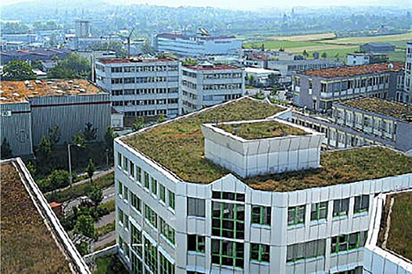 Photo of a green roof in Stuttgart.