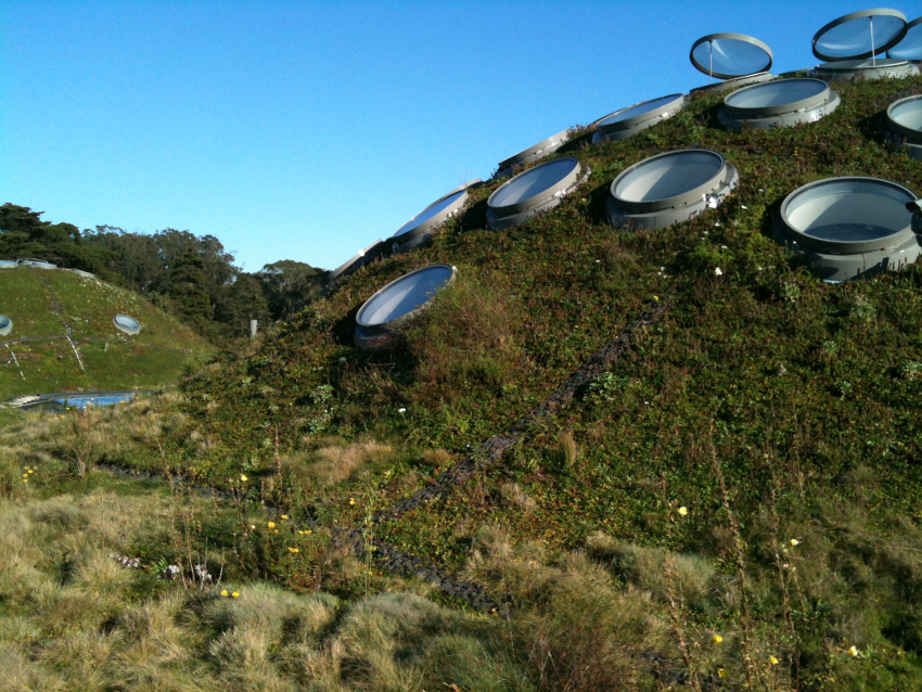Picture of green roof atop the California Academy of Sciences in San Francisco, Calif.