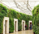Vertical Living Green Walls: Designing for Sustainability