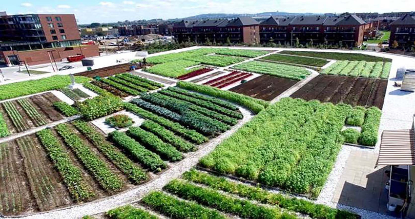 Urban rooftop farms