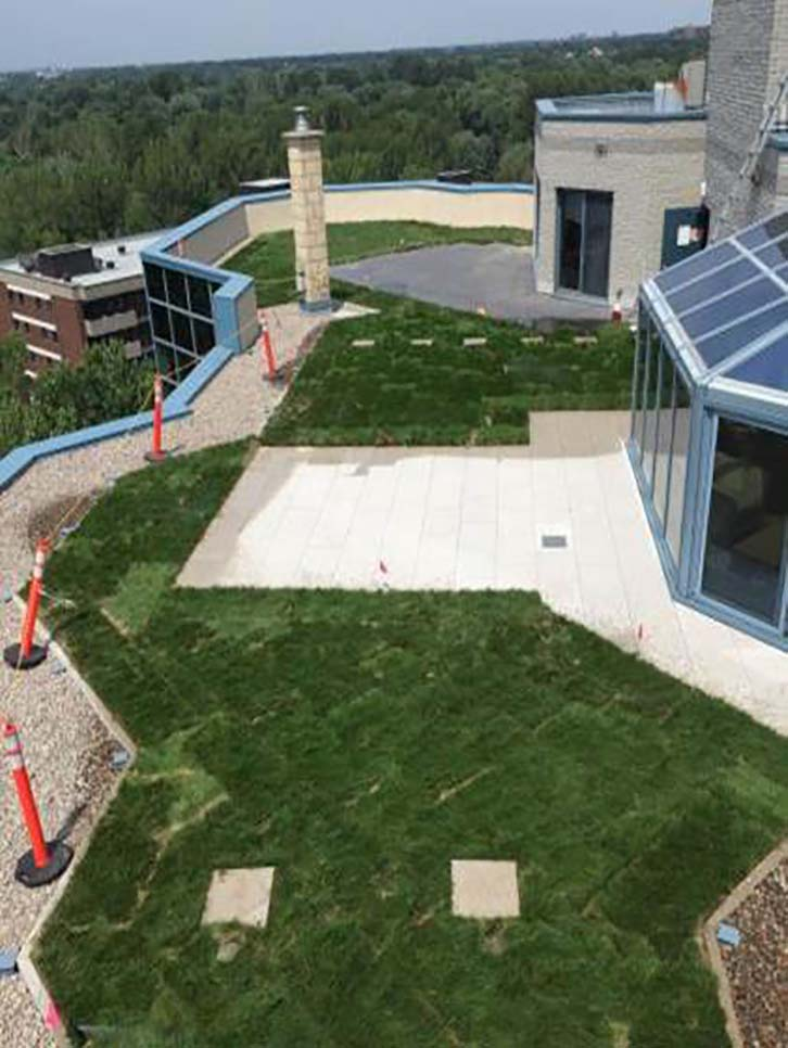 vegetation interspersed with paved or hardscaped areas on green roof